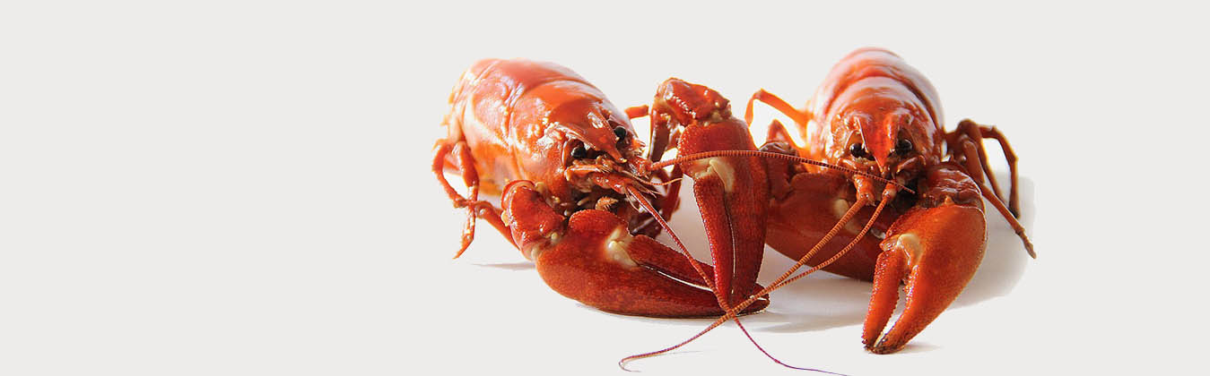 crab-slider2